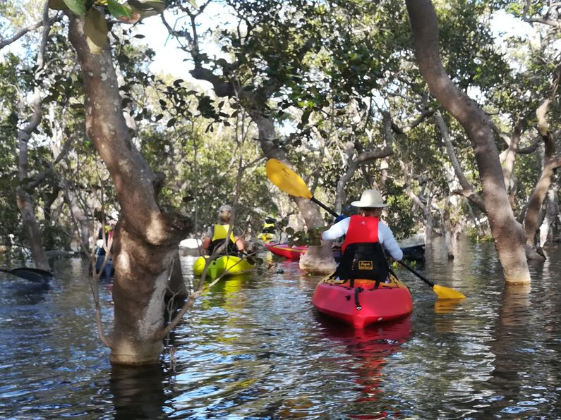Paddling kayaks around mangroves on Pelican Island