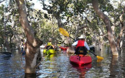 Circumnavigating Pelican Island – 5 Feb 2020