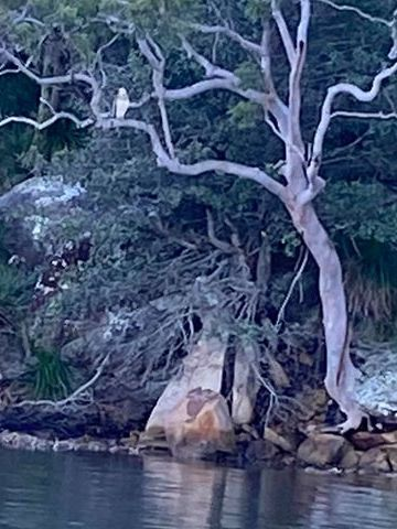 See eagle sitting on a tree on the edge of Waterfall Bay
